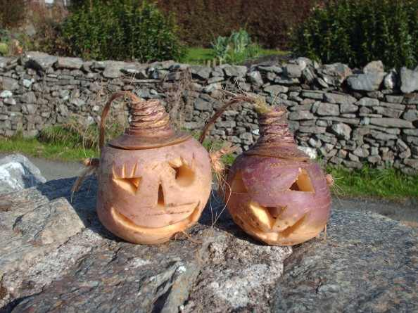 Carved-turnips-594x445