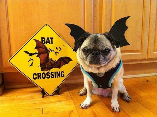 pets-ready-for-halloween-100913-05
